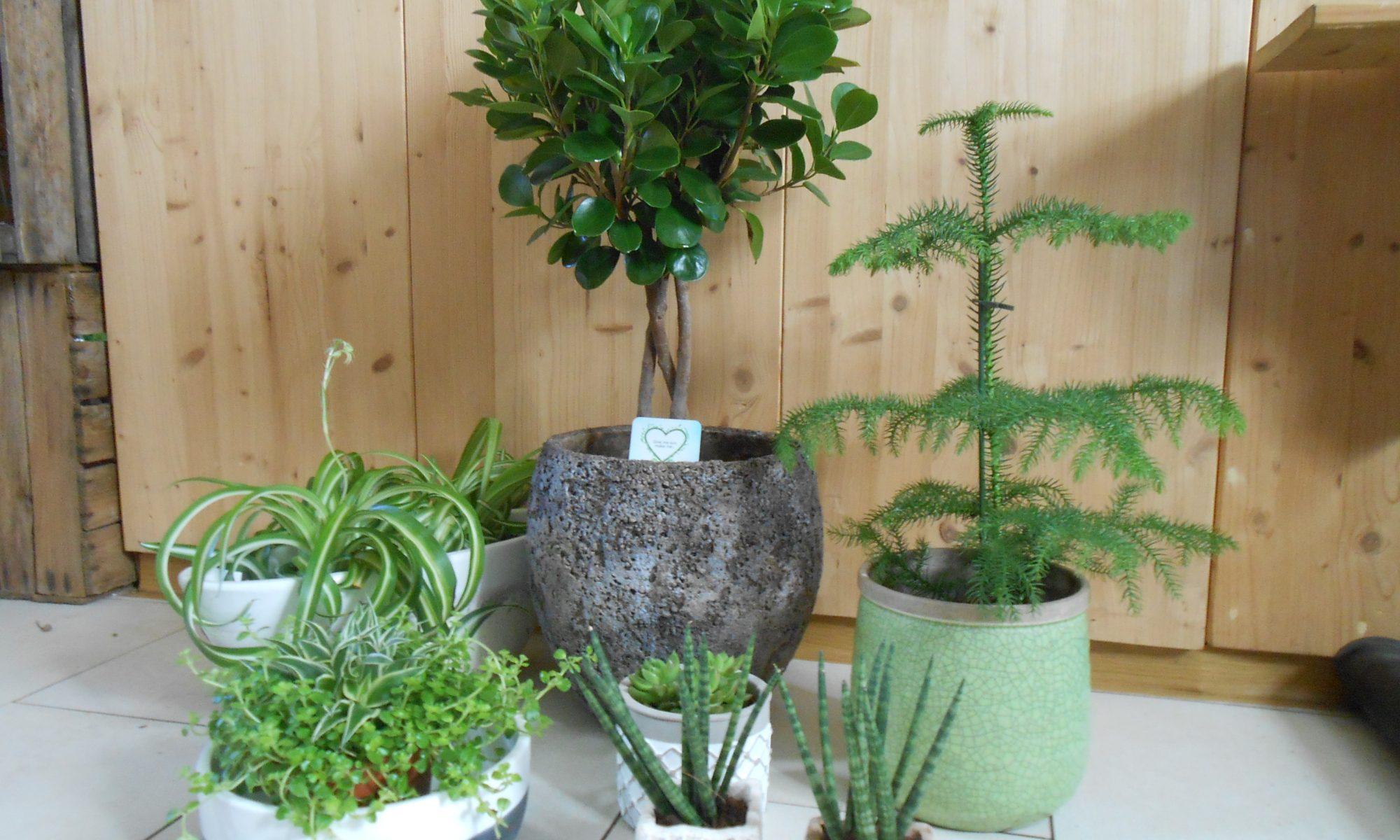 Sieben Grünpflanzen in verschiedener Art und Größe mit Übertopf.